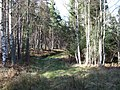 Forest ride - geograph.org.uk - 357327.jpg