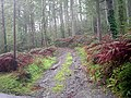 Forest track - geograph.org.uk - 972000.jpg