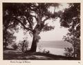 Fotografi av Lago di Albano - Hallwylska museet - 104706.tif