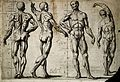 Four male écorchés or partially flayed figures. The first an Wellcome V0007793.jpg