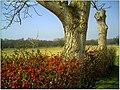 Frühling Walnuß - panoramio.jpg