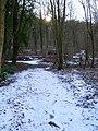 Friston Forest - geograph.org.uk - 132034.jpg