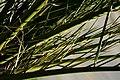 Fronds in Light (1495202246).jpg