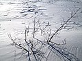 Frozen Hillsborough River, Charlottetown, PEI (16432807506).jpg