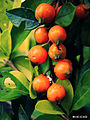 Fruta (6021064306).jpg