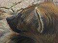 Fur shading (2625134552).jpg