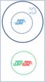 Génique adn 1.png