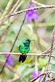Garden Emerald -7 100- (32309463934).jpg