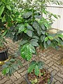 Gardenology.org-IMG 7700 qsbg11mar.jpg