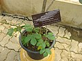 Gardenology.org-IMG 8017 qsbg11mar.jpg