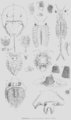 Geology and Mineralogy considered with reference to Natural Theology, plate 45.png