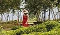 Georgian Woman in a Tea Farm.jpg