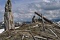 Gifford Pinchot National Forest, Mt St Helens NVM, Blast Zone (36338799084).jpg