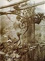 Gloeden, Wilhelm von (1856-1931) - n. 2750 - da - Amore e arte, p. 67.jpg