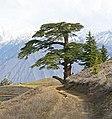Gol National Park, Chitral, KPK, Pakistan (35220554743).jpg