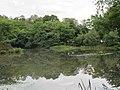 Golding's Hill Pond - geograph.org.uk - 2502459.jpg