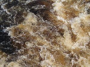 "Gordon River - The ""weak tea"" coloured water of the Gordon River."