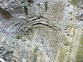 Gorges de la Fou 2012 07 16 07.jpg
