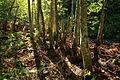 Gråor-skog etter Olterudelva på Toten AA.JPG