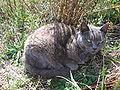 Grace(cat)5.jpg