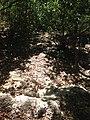 Gradas below - panoramio (1).jpg
