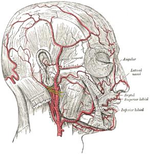 後頭動脈's relation image