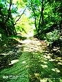 Greek nature4.jpg