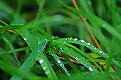 Green Grass With Dew.jpg