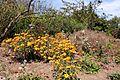 Green Spring Gardens Fall 2013 (10106920344).jpg
