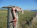 Grisly remains - geograph.org.uk - 1634128.jpg