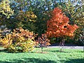 Gryshko botanical garden (Oct 2017) 1.jpg