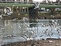 Gulls at Chelles-Gournay gateway.jpg