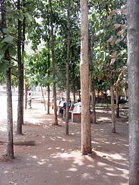 Gundulpet Bus Station has a small teak forest.jpg