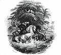 Gymnoten-Humboldt battle with horses.jpg