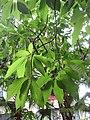 HK 灣仔 Wan Chai 胡忠大廈 Wu Chung House Rest Garden West wing October 2017 IX1 green plant tree leaves 01.jpg