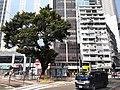HK CWB 銅鑼灣 Causeway Bay 禮頓道 Leighton Road October 2019 SS2 30.jpg