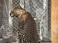 Hai Bar Yotvata Nature Reserve 25.jpg