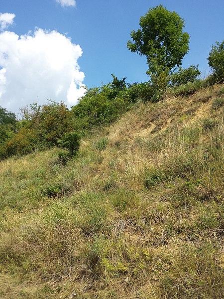 File:Halbtrockenrasen und Weingärten nördlich Oberthern sl5.jpg