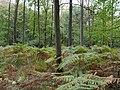 Hambach forest 12.jpg