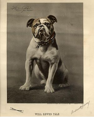 Yale Bulldogs football - Yale's original mascot Handsome Dan
