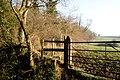 Hanglands Covert, Charlton Horethorne - geograph.org.uk - 637159.jpg