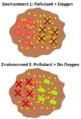 Hartsock Aerobic Anaerobic Bioremediation Examples.png