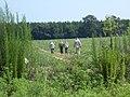 Harvesting Watermelons in Alabama 33.jpg