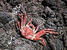 Hawaii-red-crab.jpg