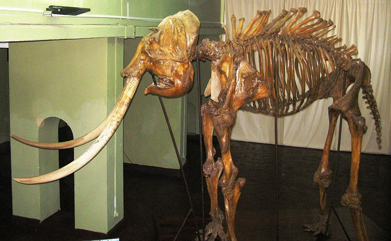 Heiyantuduwa Raja%27s Skeleton.jpg
