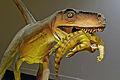 Herrerasaurus ischigualastensis DSC 6182.jpg