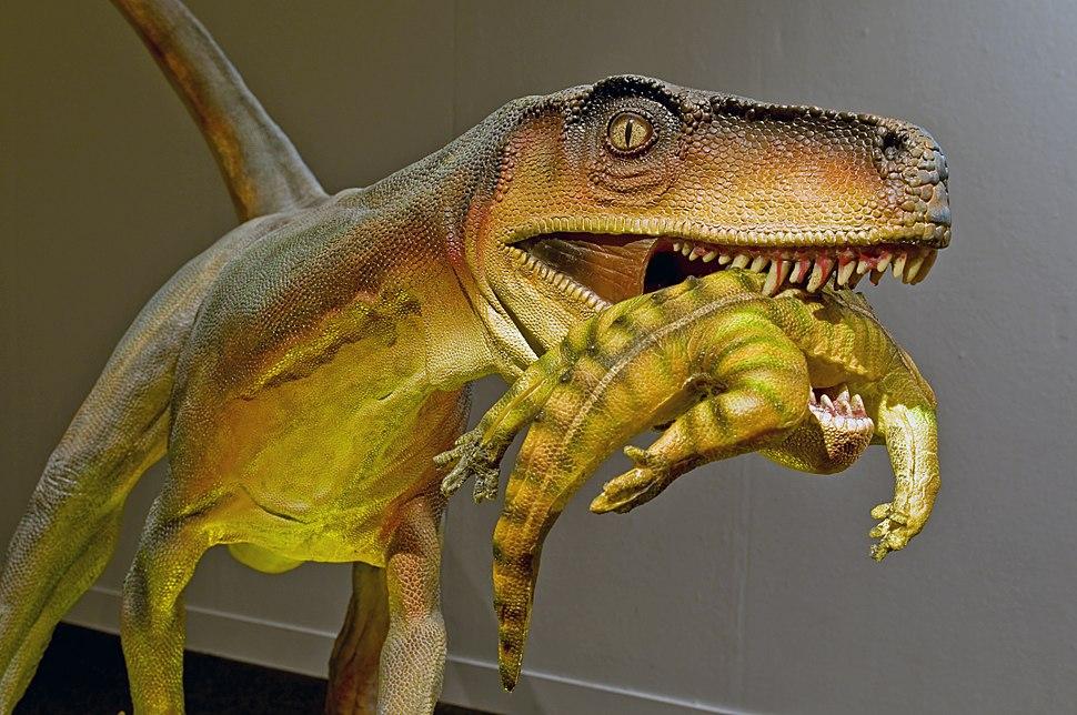 Herrerasaurus ischigualastensis DSC 6182