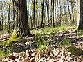 Hierochloe australis sl47.jpg