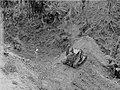 High angle view of a man descending a hill in a bulldozer (AM 77378-1).jpg