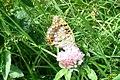 High brown fritillary (Bač) (37985104241).jpg